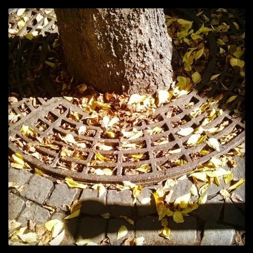 hulló levelek